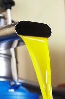 extraction à froid de l'huile d'olive