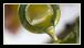 A l'heure à laquelle nous écrivons, voici pour nous les huiles d'olive les meilleures. NB : vous avez le droit de ne pas être d'accord…