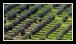 Les AOC d'huiles d'olive en France