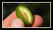 La plus consommée chez nous car c'est la championne des salades. Elle provient d'olives récoltées dès le début de la saison et triturées dans les 24 heures.