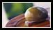 Pour bien comprendre l'huile d'olive et l'importance du terroir, il est bien de comparer l'huile d'olive au vin.